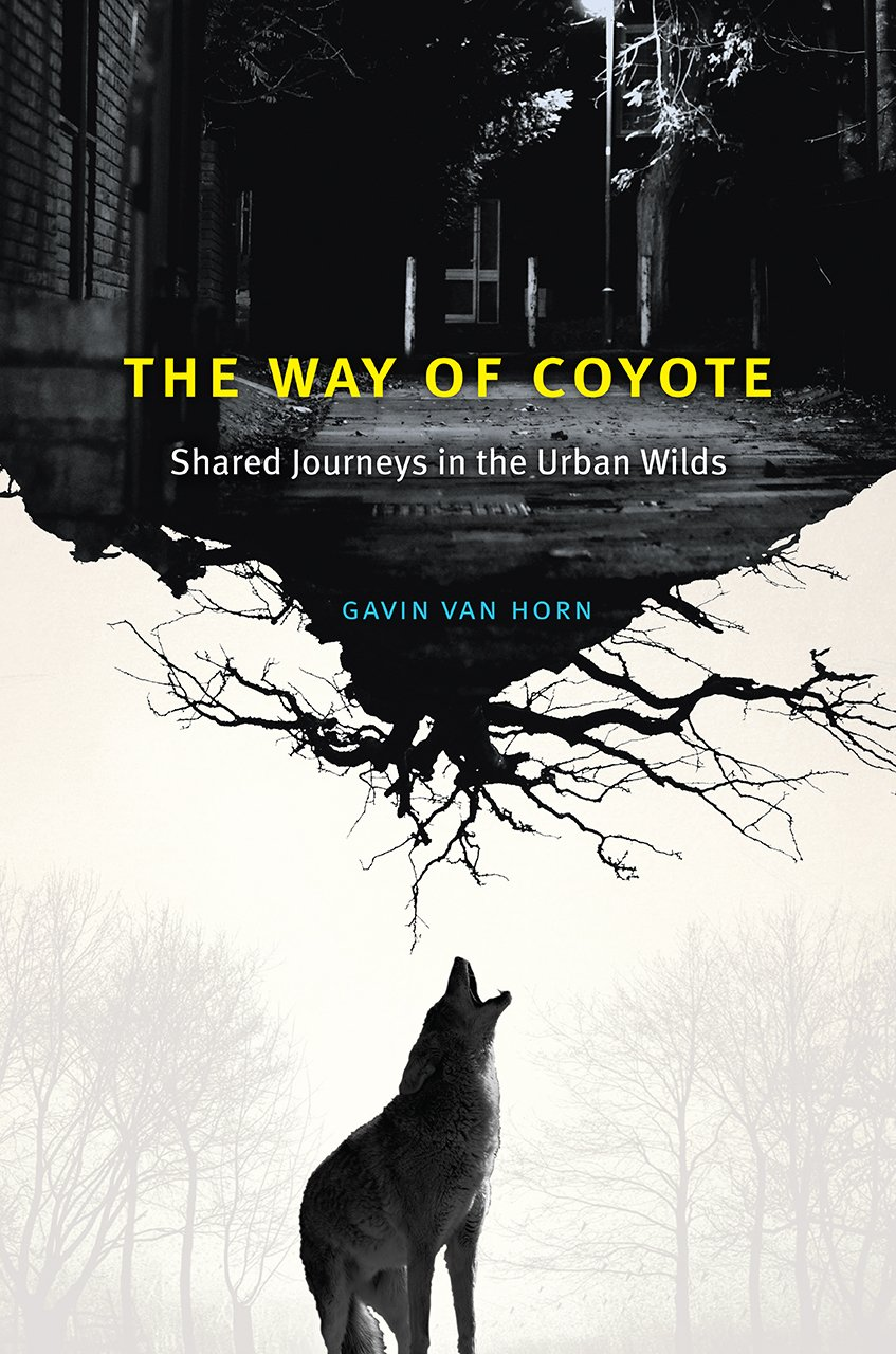 thewayofcoyote